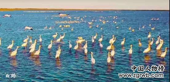 黄河口实力刷屏 中国·东营首届短视频网红大会收官