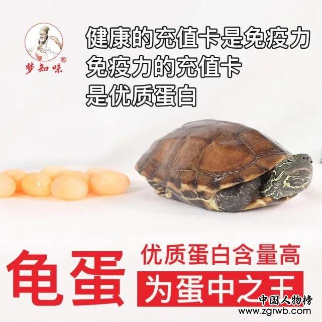 梦知味乌龟蛋,开启福寿密码